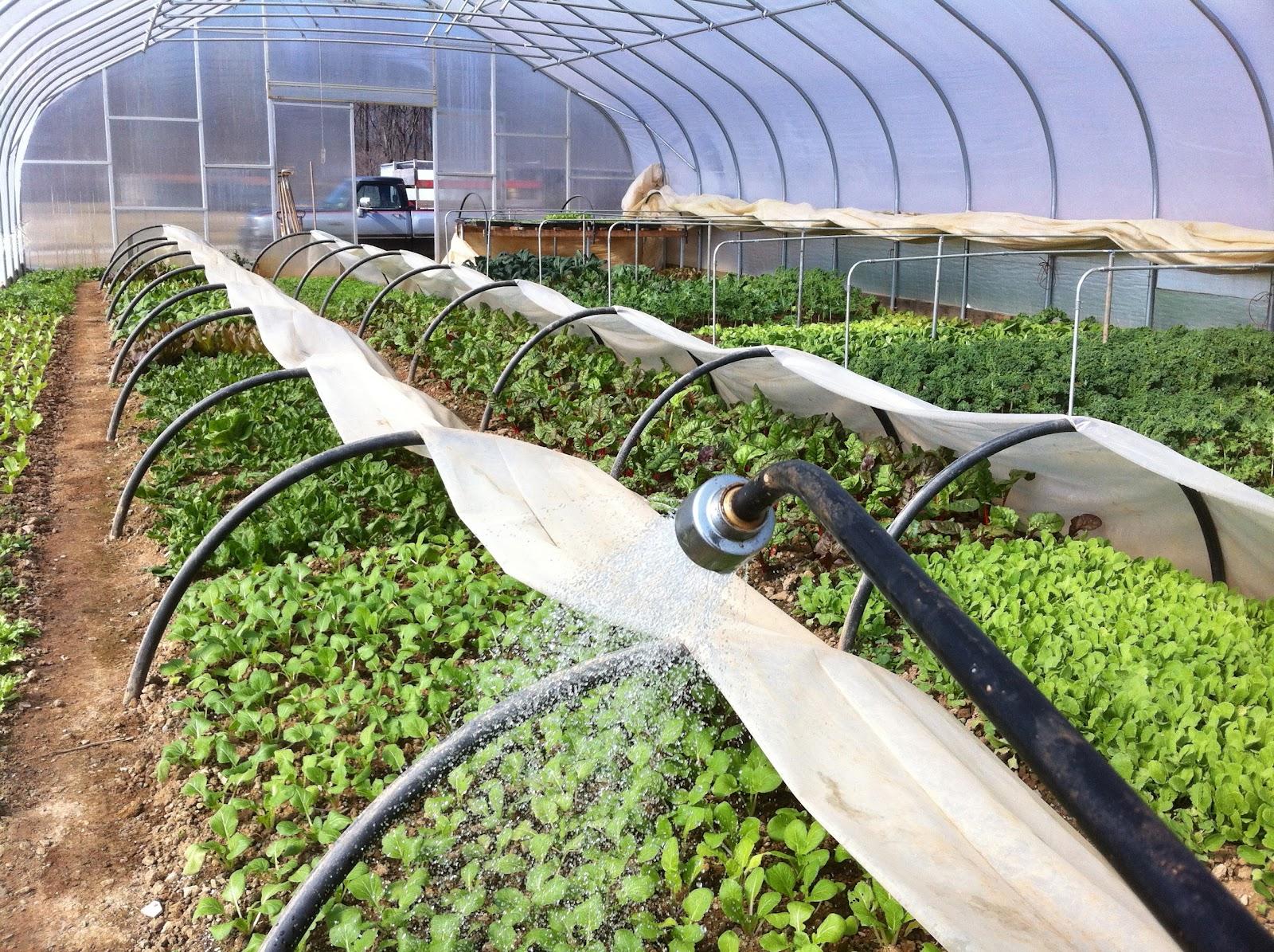 Växthus Odla : Starta en växthusodling